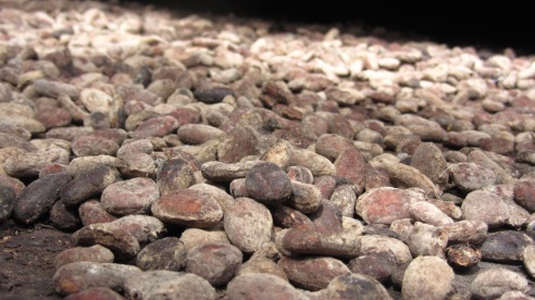 Cocoa beans ready for processing. (Credit: Cassie Martin)
