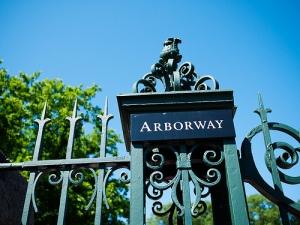Arnold Arboretum. Photocredit: Ciera Hozenthal (flickrCC)