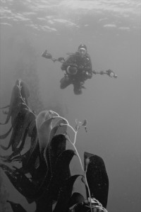 Keith Ellenbogen, underwater photographer and Center for Art, Science, and Technology visiting artist at MIT, on an assignment within the kelp forests off the coast of Monterey, California. Photo courtesy of Keith Ellenbogen.